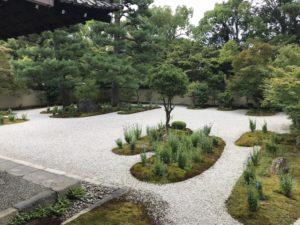 蘆山寺桔梗3