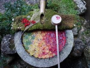 楊谷寺庭園花手水