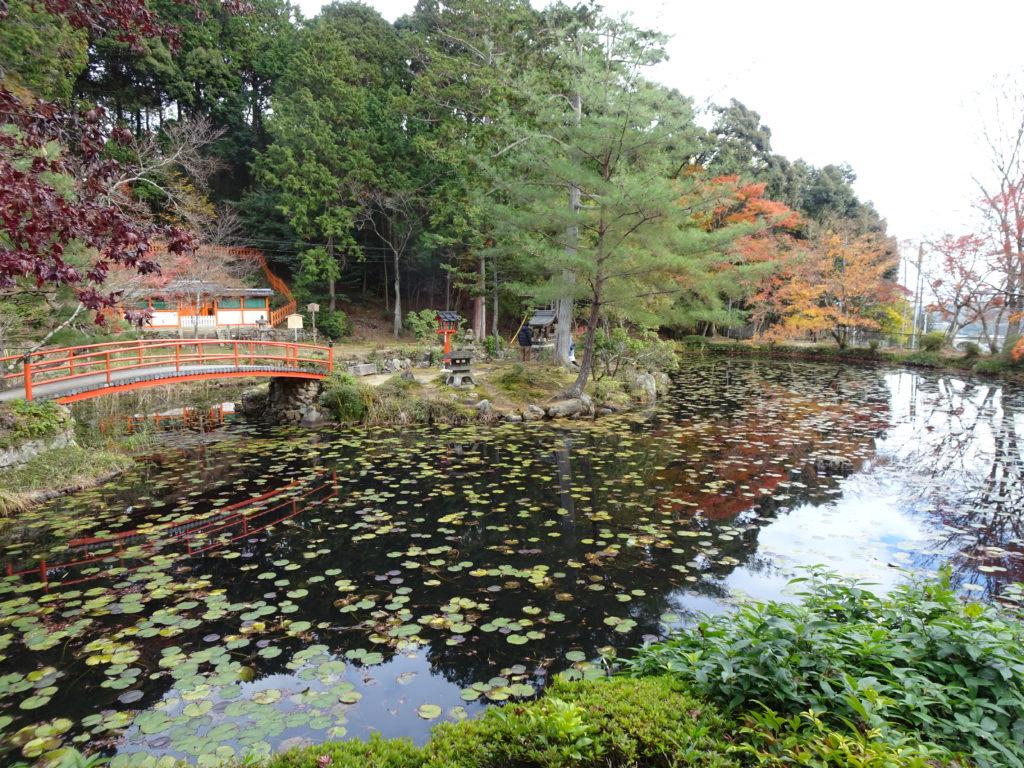大原野神社鯉沢の池2