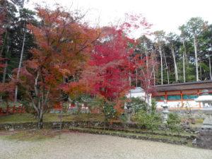 大原野神社本殿紅葉