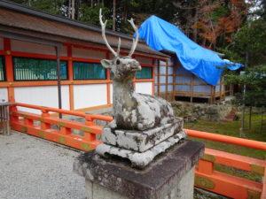 大原野神社牡鹿