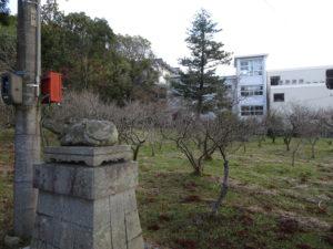 生身天満宮梅の苑1