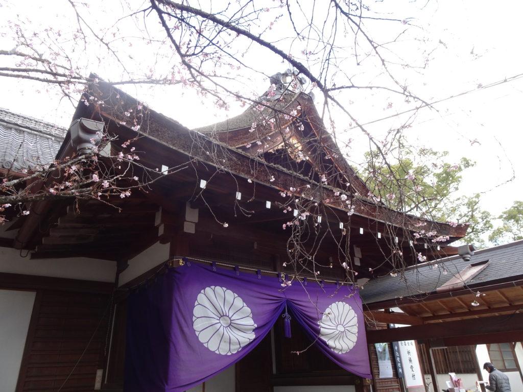平野神社10月桜2