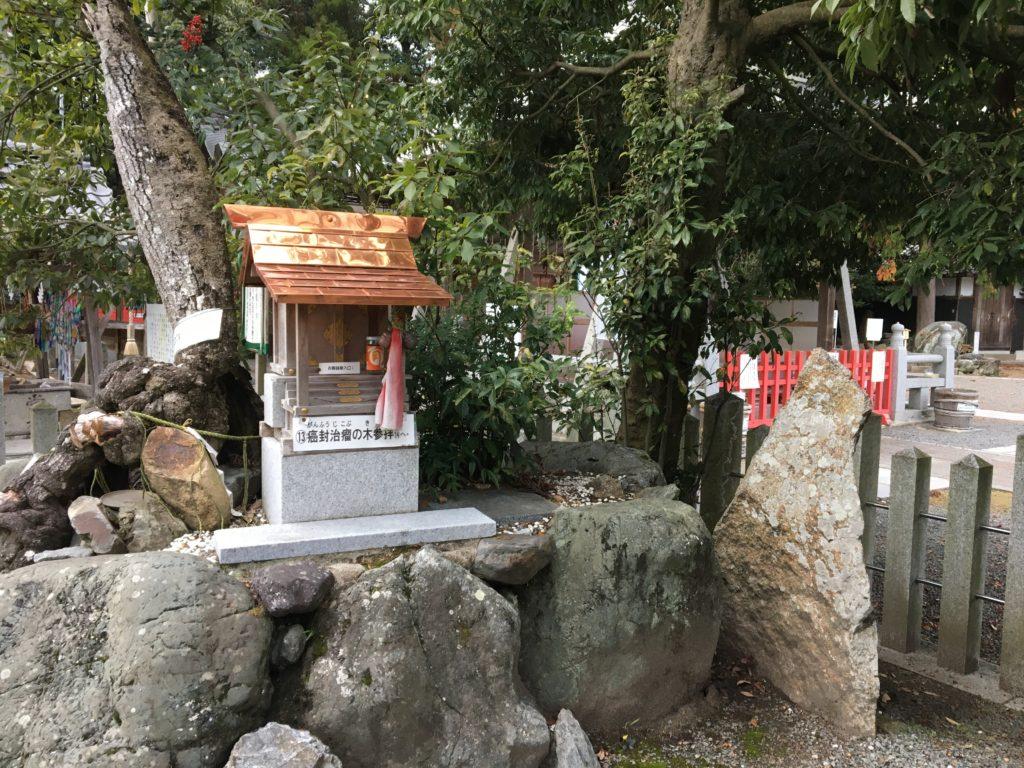 薭田野神社癌封治瘤の木1
