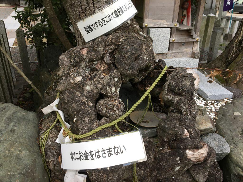 薭田野神社癌封治瘤の木2