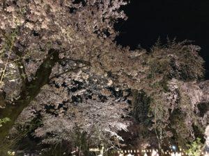 平野の夜桜3