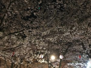 平野の夜桜4