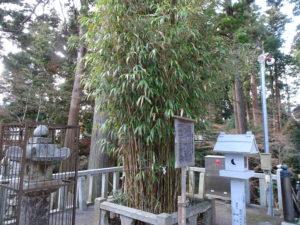 田村神社矢竹1