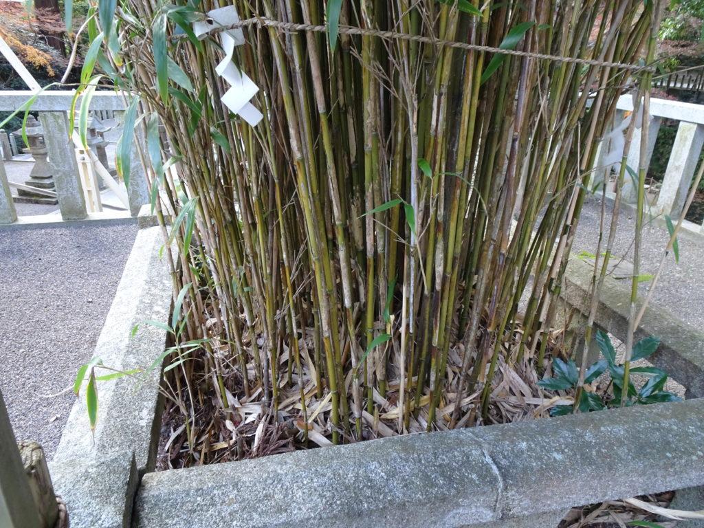 田村神社矢竹2